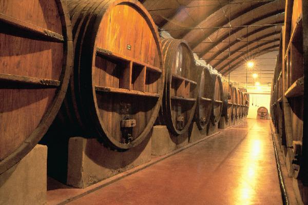 museo-del-vino-almendralejo
