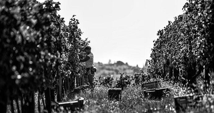 vinos-naturales-principal