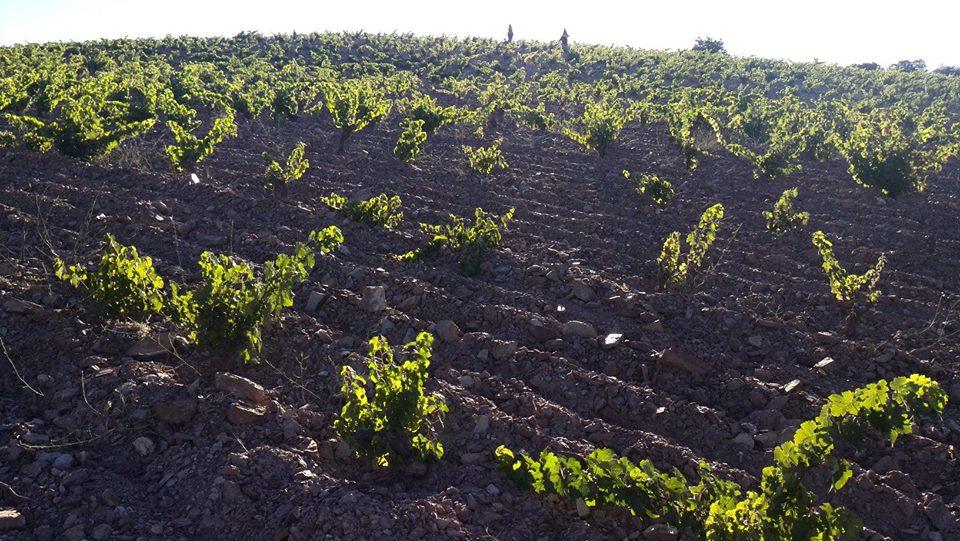vp-vinos-naturales-barranco-oscuro