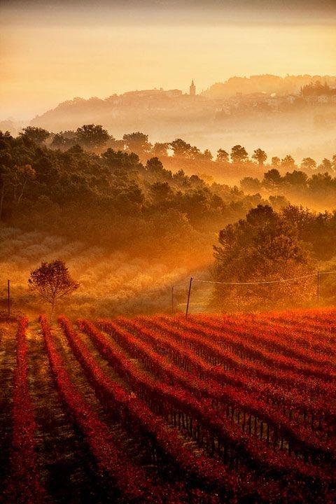 italia-viñedos