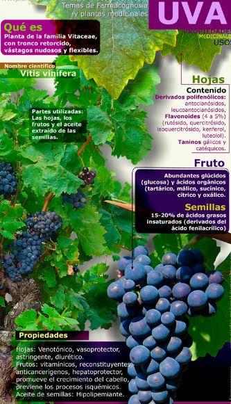 infografia-salud-uva