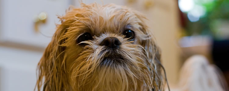 perro-mojado-02