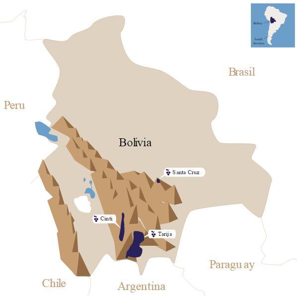 bolivia-viñedos