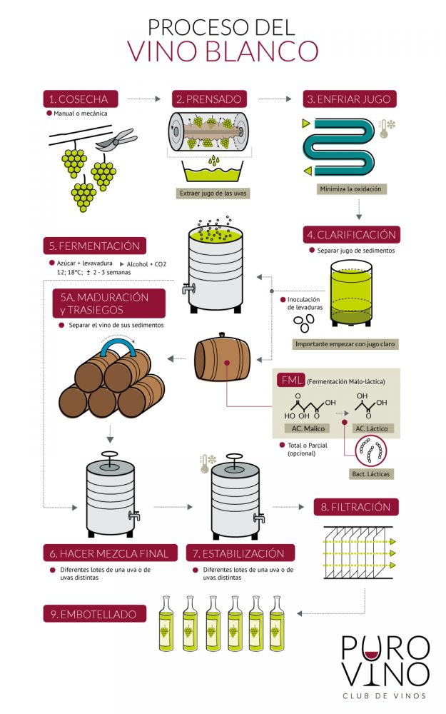 12 infograf as sobre la elaboraci n del vino vinopack for Descripcion del proceso de produccion