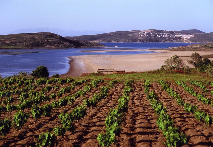 limnos-wines