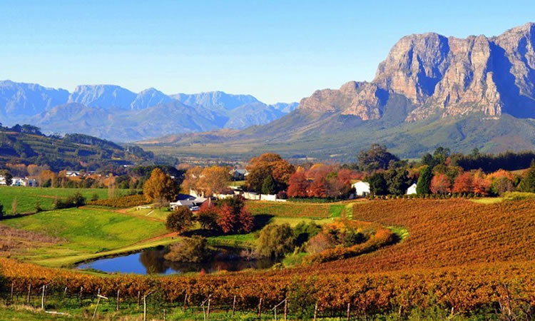 unesco-cape-vineyards