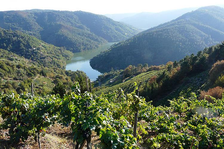 vinos-atlanticos