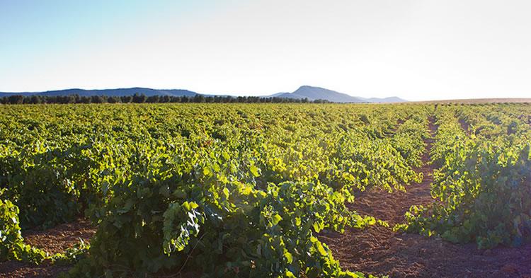 vinos-mediterraneos-portada