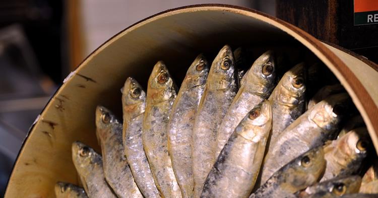 8-sardinas-prensadas