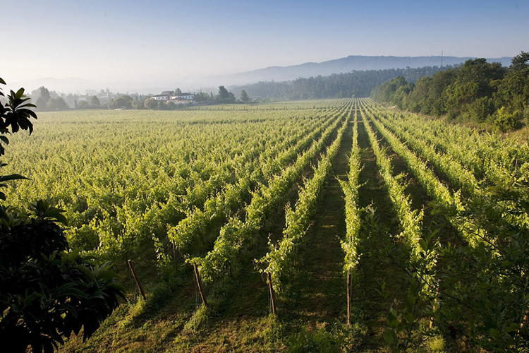vp-paisaje-vinho-verde