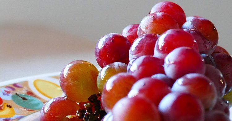 vp-maria-uvas